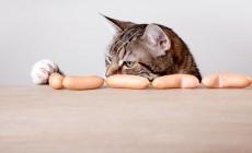 Pour nourrir les chats, il y a le distributeur de croquettes Cat Apart